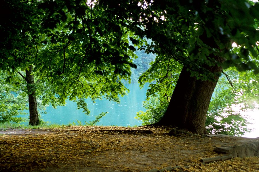 Tree by Water
